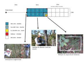 ifn_metodologia_coleta_de_dados21-290x220.jpg