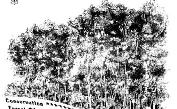 Dicionário de termos técnicos florestais - Português - Inglês.